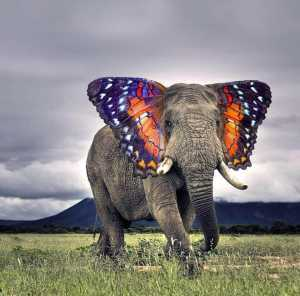 elephant with butterfly ears